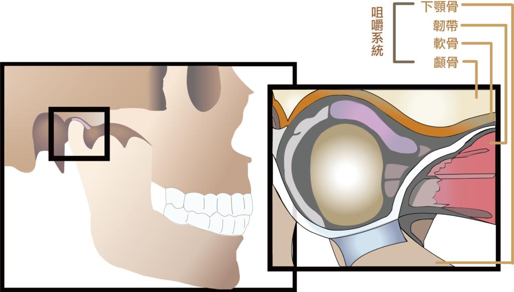 顳顎關節症候群